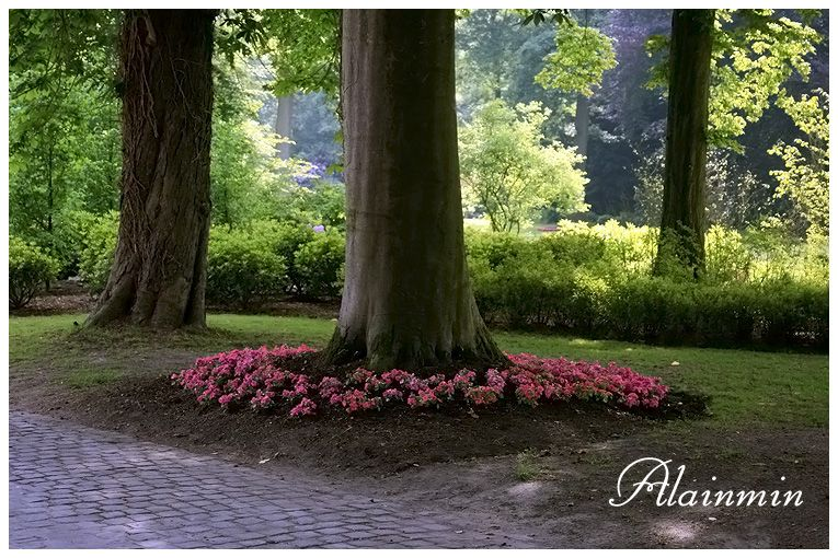 fleurs au pied d 39 un arbre jardin autour de l 39 arbre pinterest searching. Black Bedroom Furniture Sets. Home Design Ideas