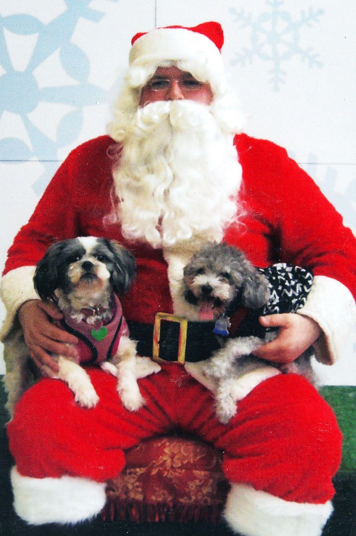 Bella & Maki with Santa - @ Petsmart - 12/08/2012 - # ...