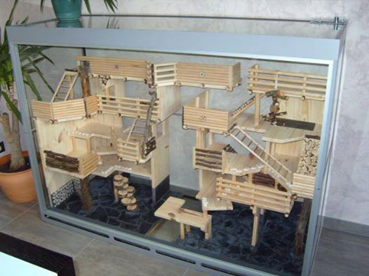 cage naturel pour souris souris maison hamster. Black Bedroom Furniture Sets. Home Design Ideas