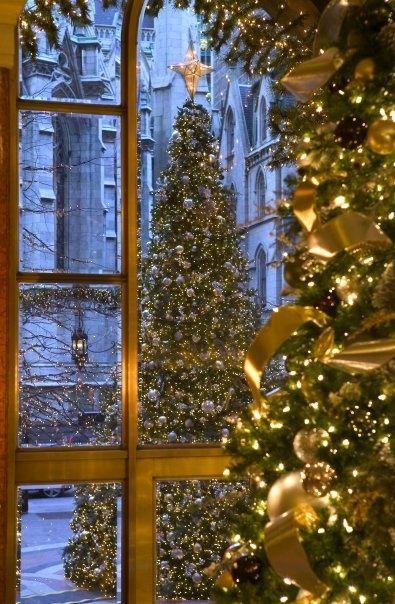 christmas tree indoor and outdoors lights winter pretty christmas christmas trees