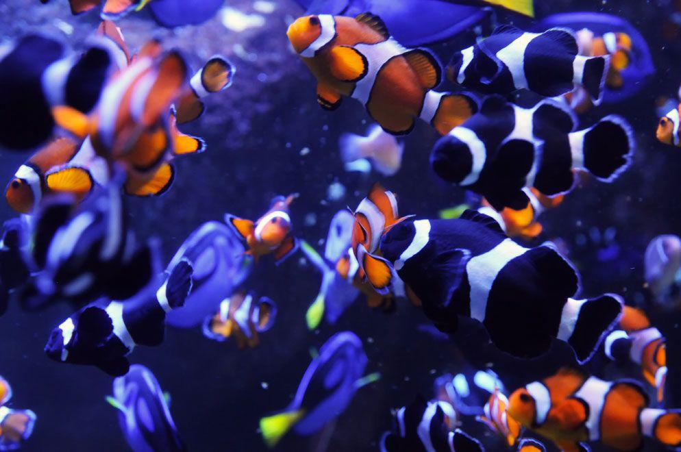 Aquarium Photography Aquarium Photos Aquarium Fish Clown Fish