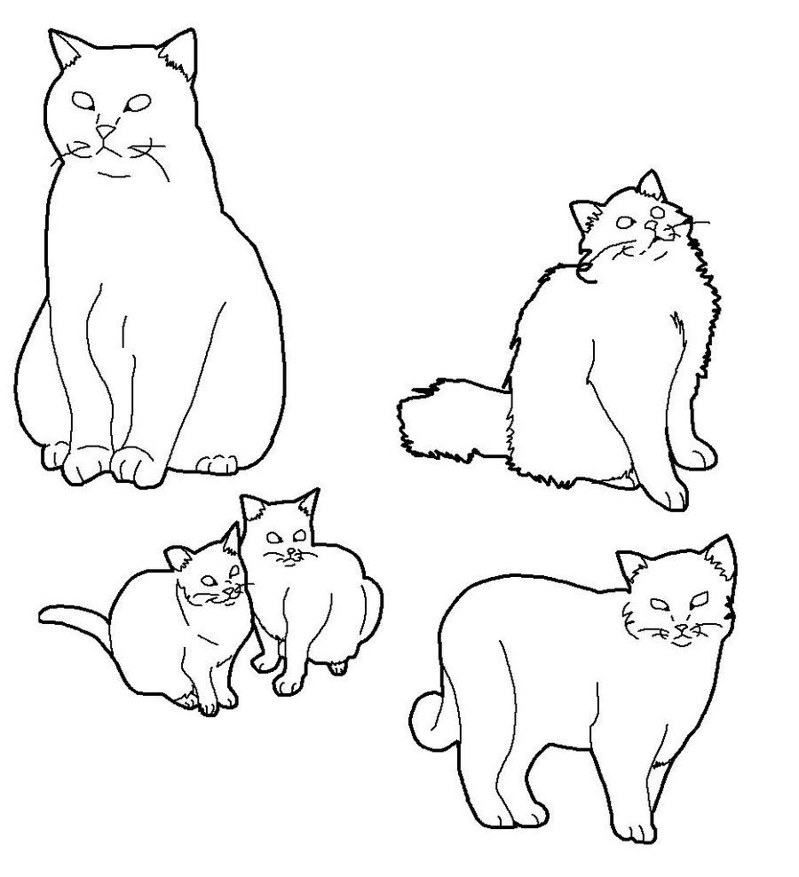 Pin by Ellie on cat drawing