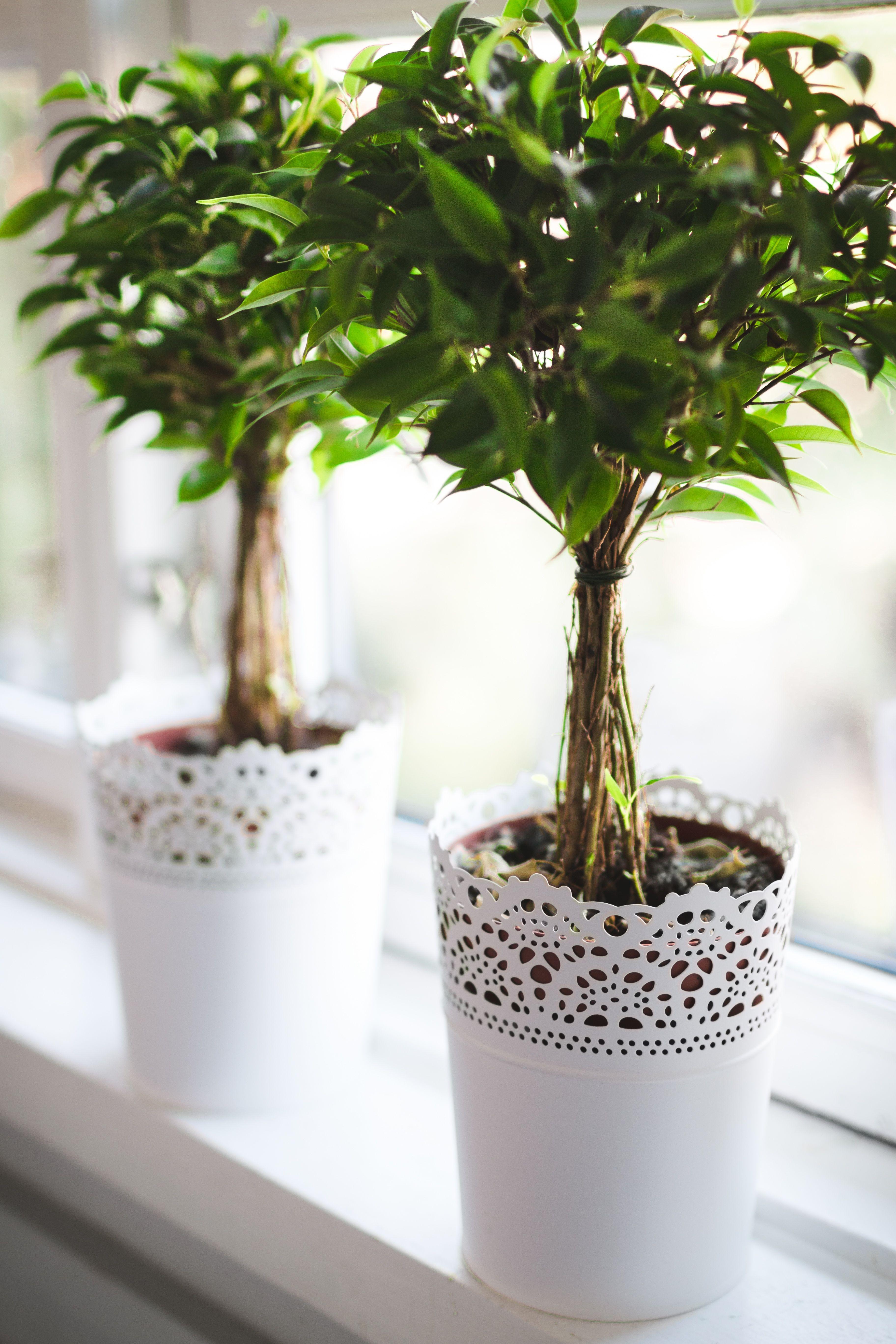 Plante Verte Dans Un Pot Ikea Plantes D Interieur Pinterest
