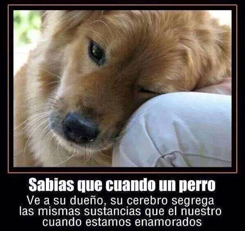 Sabias Que Cuando Un Perro Ve A Su Dueno Perros Frases Amantes De Perros Perros