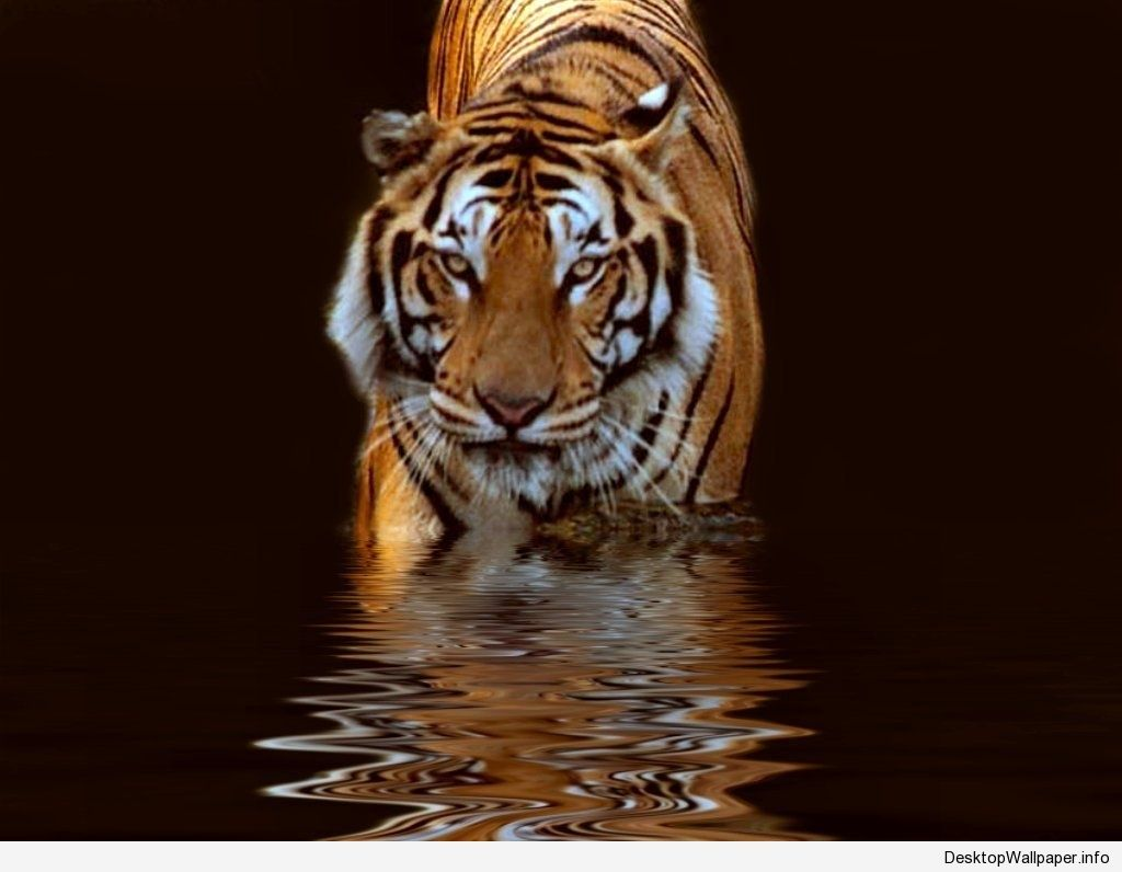 Popular Wallpaper Mobile Tiger - a70e092ab9afbd9f647d12e10ec99fbf  Collection_391613.jpg