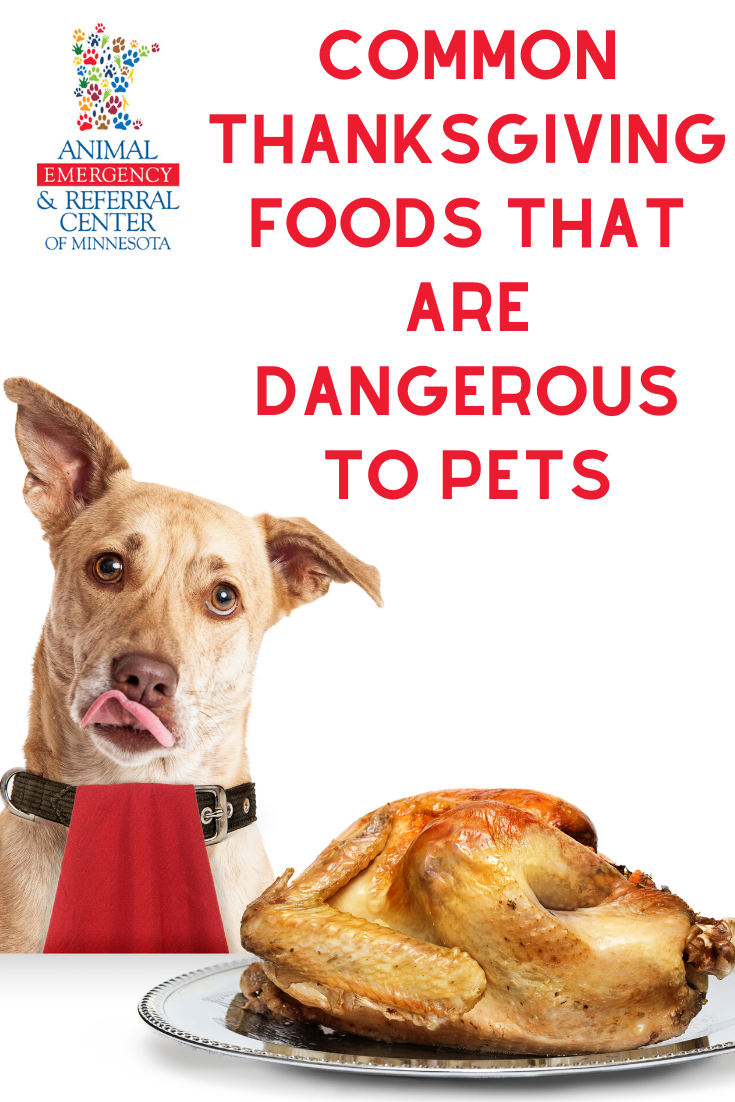 Common Thanksgiving Foods That Are Dangerous to Pets