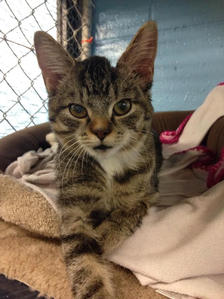 Friends Of The Oxford Animal Shelter Added 4 New Photos Do You