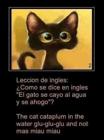 Lesson In English How Do You Say The Cat Fell Down In The Water And Drowned Strange Translation Compartirvideos Funny Spanish Memes Humor Mexican Humor