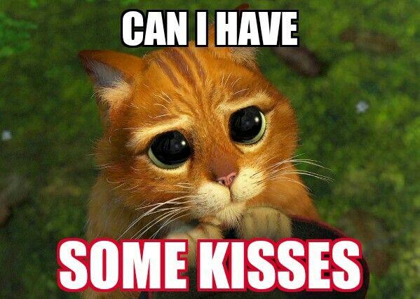 A Desperate Kitty Restaurant Humor Server Humor Cat Memes
