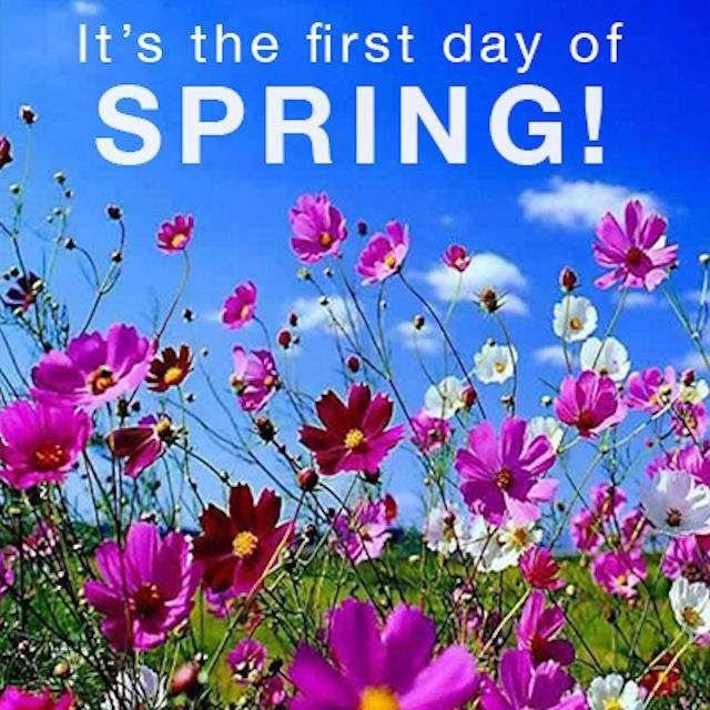 It S The First Day Of Spring Spring Flowers Wallpaper Spring Wallpaper Spring Flowers