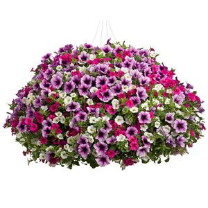 Garden Crossings Offers You Options For Your Combination Container  Plantings. Purchase Calice Delight Combo Kit