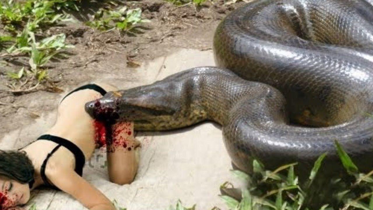 most amazing giant anaconda attacks king cobra attacks