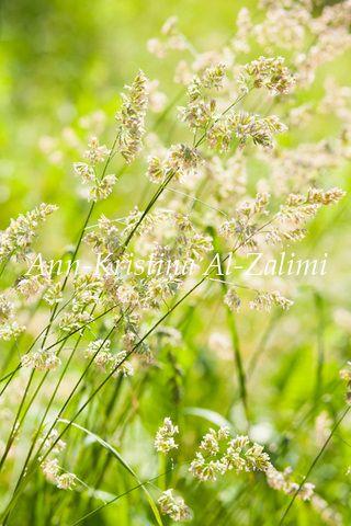 by Ann-Kristina Al-Zalimi, heinä, kesä, nitty, summer, skandinavia, sunshine, sunny, meadow, grass, green, fine art photography, fine art