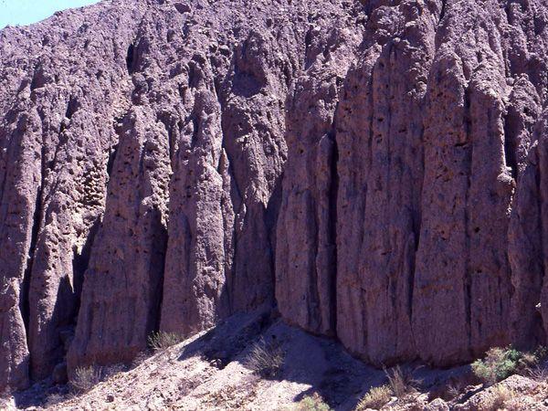 Nidos en la barranca Quebrada de las Conchas (SA) Cyanoliseus patagonus- loros barranqueros