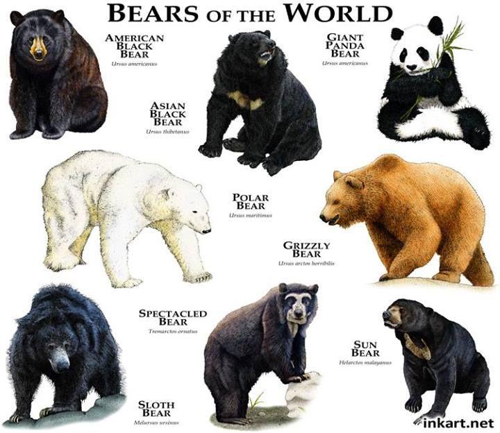 Bears Of The World Bear Species Animals Beautiful Animals