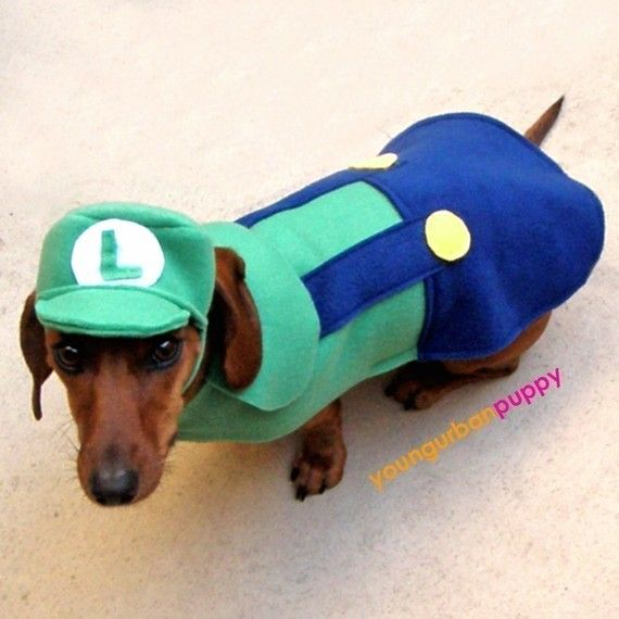 LUIGI NINTENDO Dog Costume | Arts & Crafts | Pinterest ...