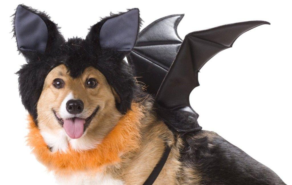 Bat dog costume dog costumes funny pet costumes dog