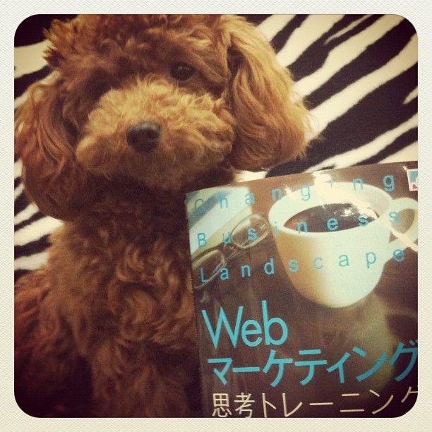 Webマーケティング思考トレーニング  http://iwazumi.jp/post/20174128777/web