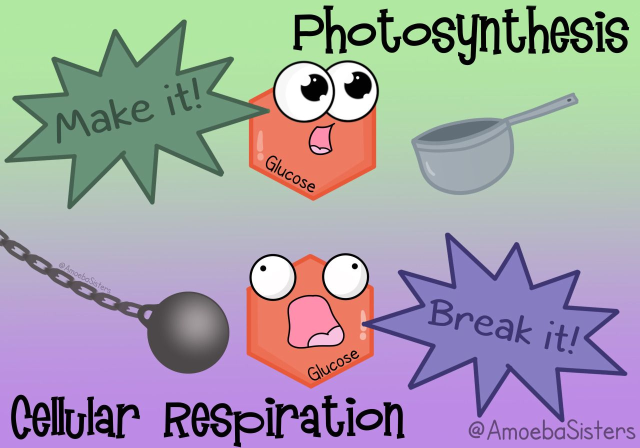 A Little Science Funny To Help Keep Photosynthesis And