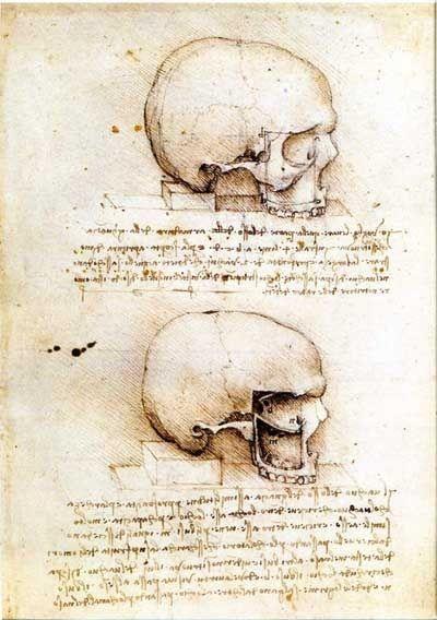 da Vinci, Anatomy of Skull and Eye Cavity | Leonardo da ...