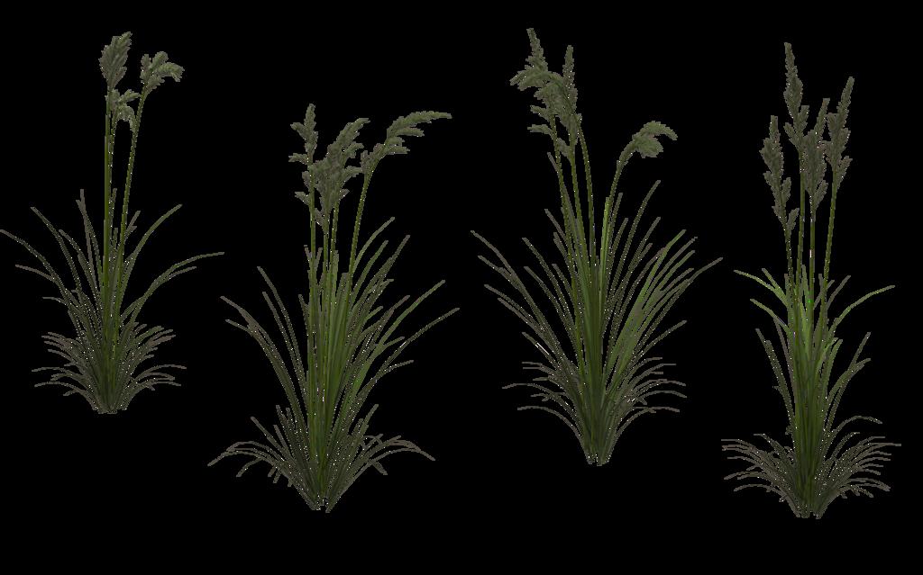Grass 08 By Wolverine041269 On Deviantart Landscape Architecture Graphics Photoshop Textures Minimal Photo