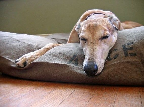 Dog Bed Duvet Cover XL 38x50 Featured on HGTV  MANY by BowWowBeds, $40.00