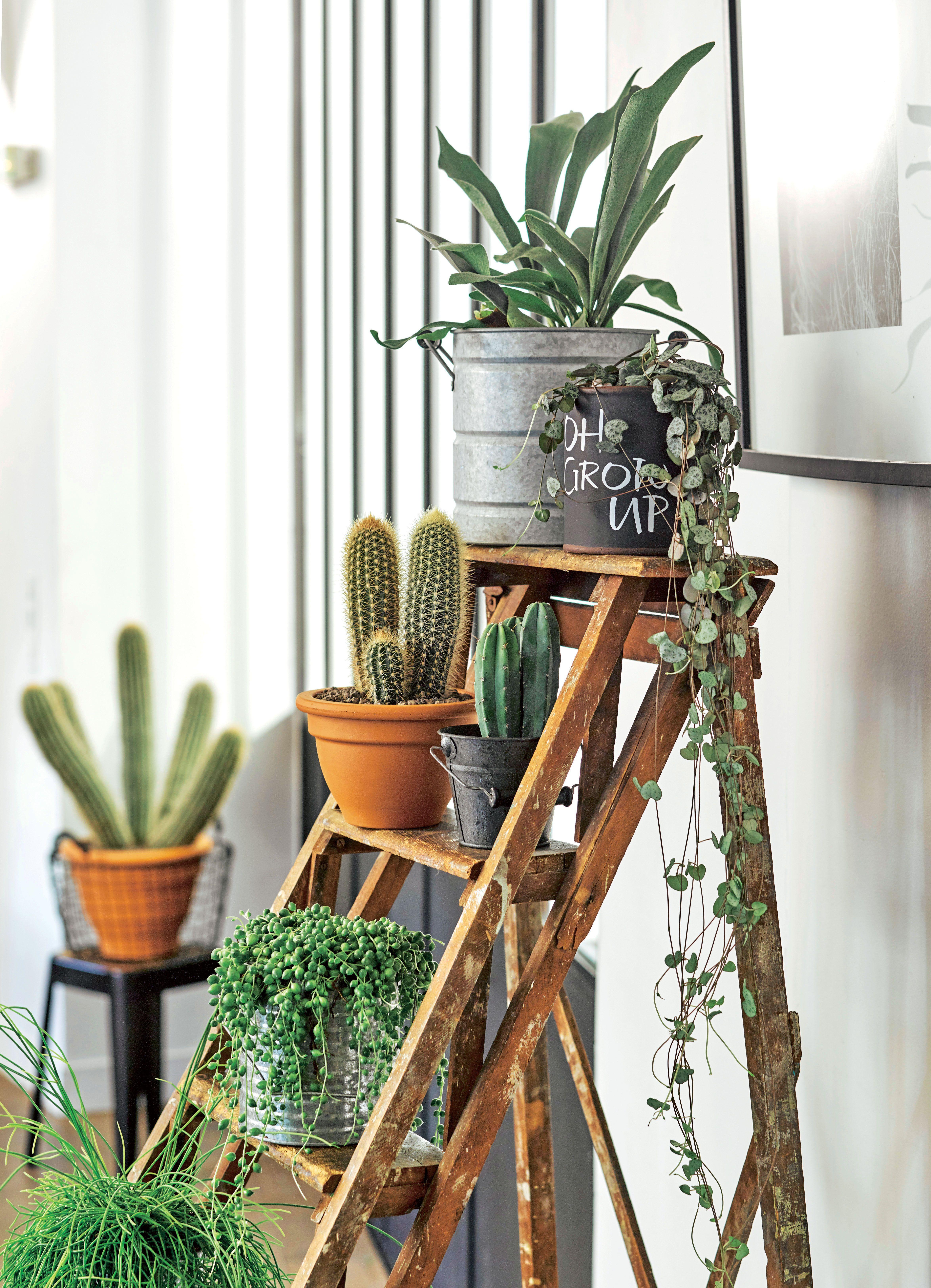 les cactus deviennent des l ments de d co plantes d 39 int rieur pinterest le cactus. Black Bedroom Furniture Sets. Home Design Ideas