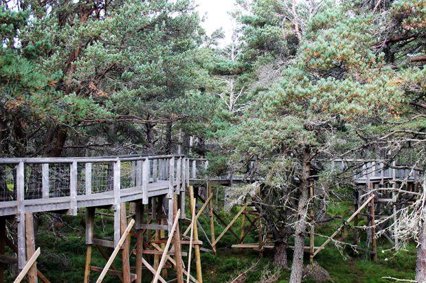 Landmark Forest Adventure Park Scottish Outlander Forest Adventure Adventure Park Adventure