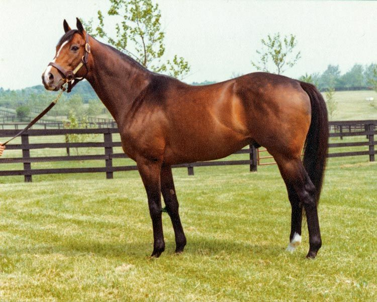 The Exceller Fund acquires Thoroughbred horses that might