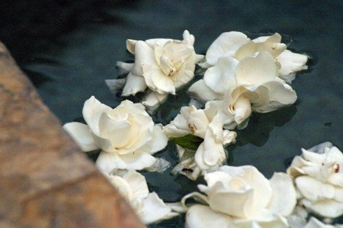 Floral Fusion Gardenias Floating In A Pool This Is A Very Classic Vintage Look Floral Floral Design Flowers