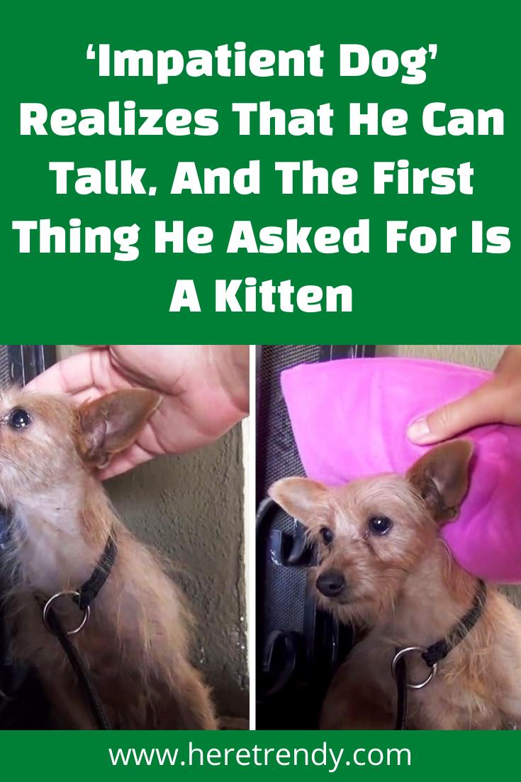 Pin On Animal Videos