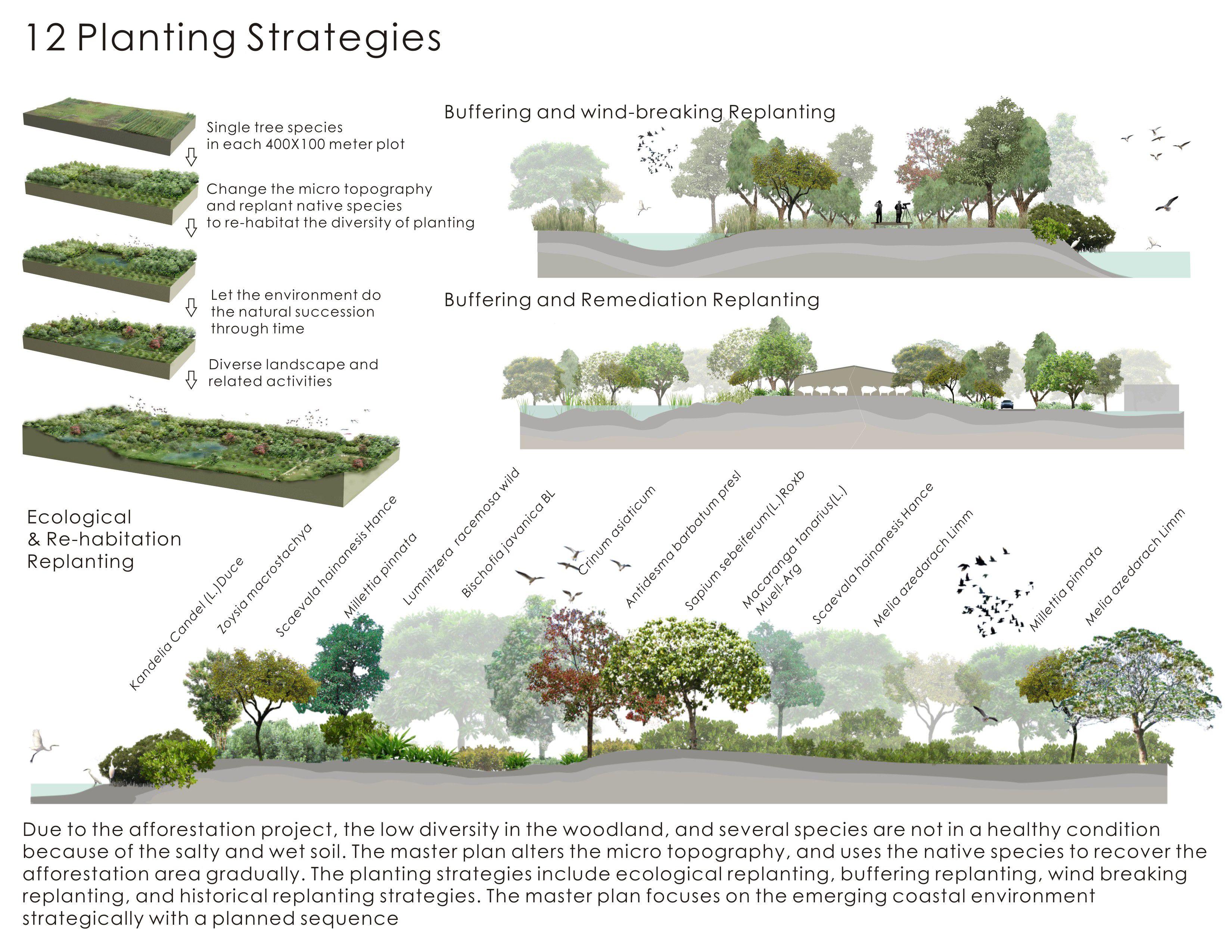 planting strategies [ 3300 x 2550 Pixel ]