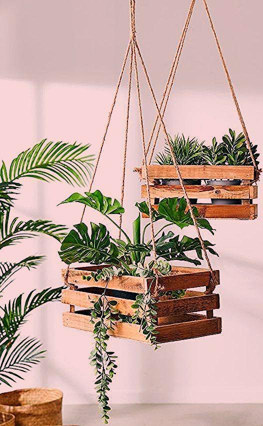 Hängepflanzen, Zimmerpflanzen, Freilandpflanzen - #Freilandpflanzen #Hängepfla... - Mein Blog