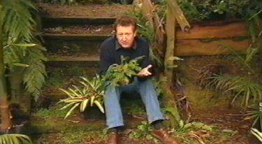 Gardening Australia - Fact Sheet: Tropical Looking Plants Down South