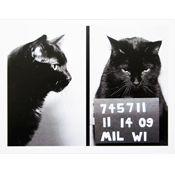 Mugshot Kitty