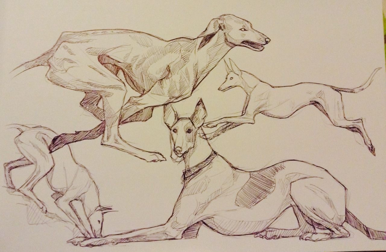 Daily drawings 6. Some biro photo studies of some hounds of various sorts :) - #Animal #art #artists #hound #on #sketches #tumblr