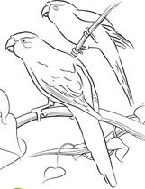 Kakrikis Coloring Pages And Many More Bird Coloring Pages For The