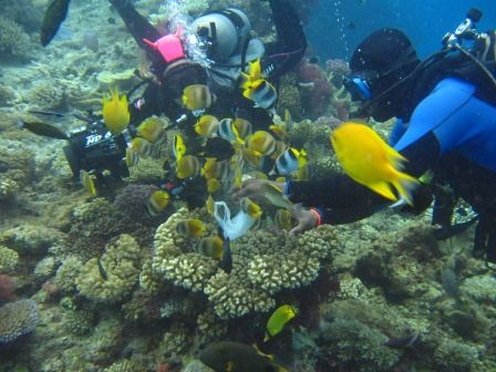 Scuba Diving - Seatech Marine Products / Daily Watermakers