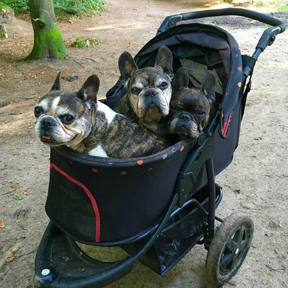 Pet Roadster by TogFit, Black Dog stroller, Pets, Pram