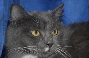 Adopt Fuzzy on Cats, Dog cat, Kitty