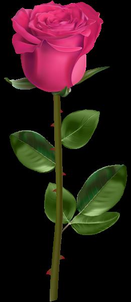 Rose Su Stem Pink Skaidriais Png Atvaizdais Flower Drawing Flower Phone Wallpaper Amazing Flowers