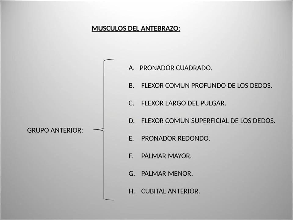 Pin de Jhenny Espinoza Herrera en Musculos Miembro..