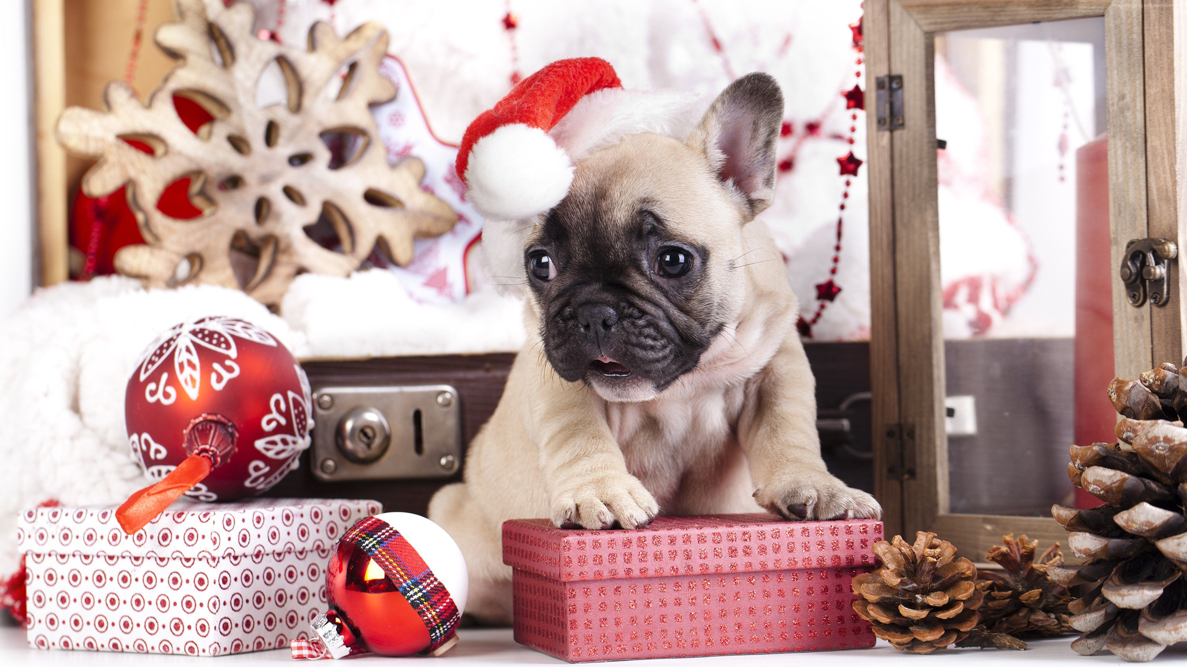 Wallpaper Puppy Cute Animals Christmas New Year 4k Holidays