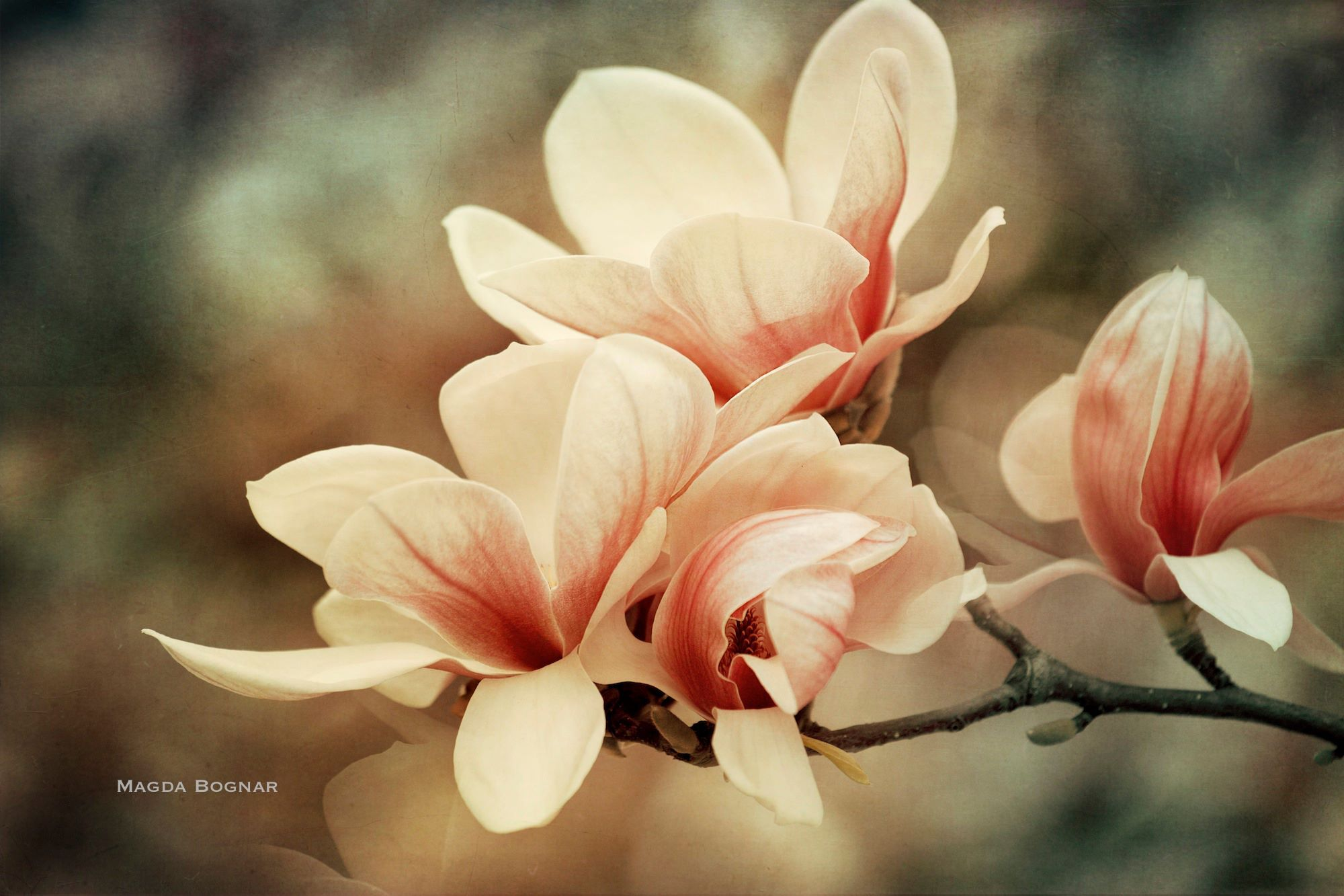 Congratulations to the author © Magda Bognar We would like to remind authors that it is possible to leave your comments directly on the Pinterest site.
