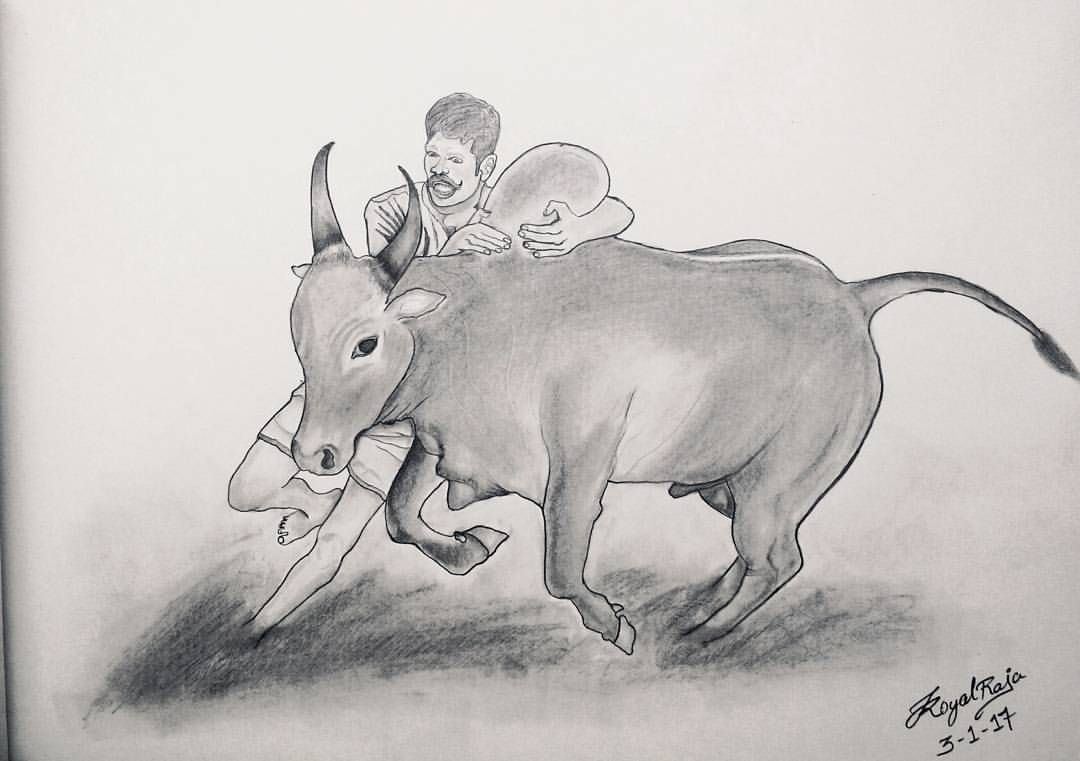 Jallikattu Pencil Drawing