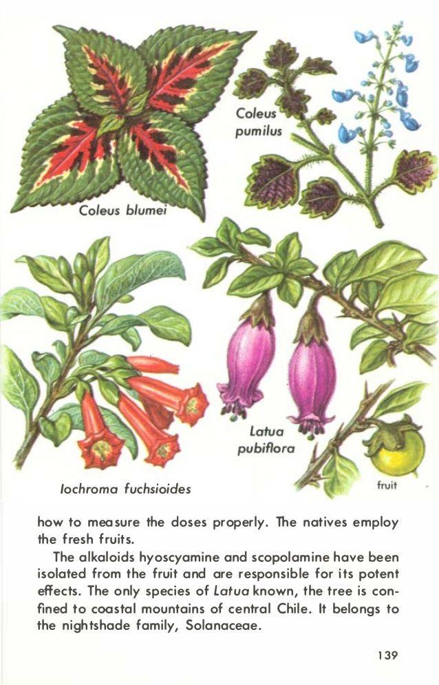 hallucinogenic plants a golden guide ashoglam gmail com in 2018 rh pinterest com golden guide hallucinogenic plants pdf golden guide hallucinogenic plants pdf