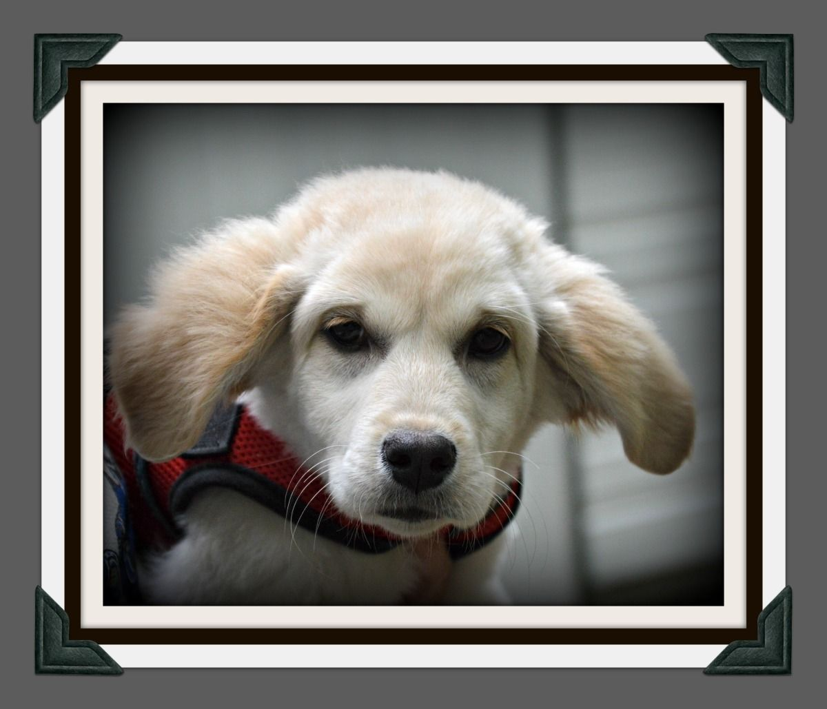 Adopt BLONDIE on Help homeless pets, Mixed breed dogs