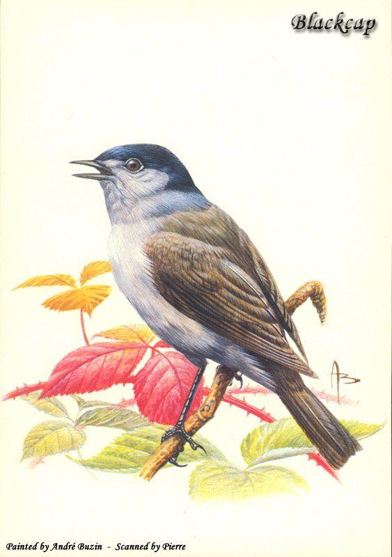 Птички нарисованные своими руками 68
