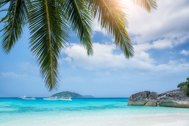 Tropical white sand beach with palm trees, Similan Islands, Phuket, Thailand