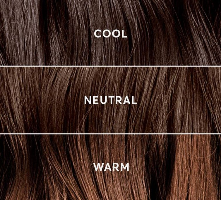 Is My Hair Color Warm or Cool? | Warm hair color, Cool hair color, Hair  gloss
